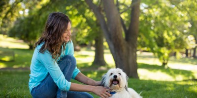 3 studies showing that dogs can also eat vegan